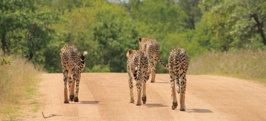 Win a luxury safari holiday in South Africa