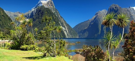 Win a trip to New Zealand for two, with kiwi conservation experience