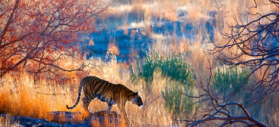 Epic India Golden Triangle private tour with tiger safaris, Delhi, Agra, Jaipur & Ranthambore