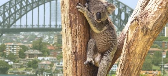 Spectacular Australia east coast adventure with optional Great Barrier Reef, Sydney, Cairns, Airlie Beach, Rockhampton, Queensland & Brisbane