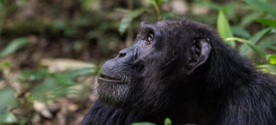 Win a Uganda primate & wildlife tour for two