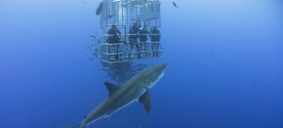 7nt 4* Cape Town Escape & Shark Cage Diving Experience