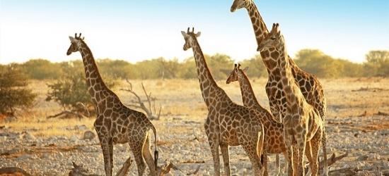 Epic self-drive tour of Namibia's natural wonders, Windhoek, Kalahari Desert, Namib Desert, Swakopmund, Damaraland, Etosha National Park & Okahandja