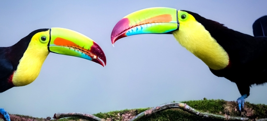 Tropical Costa Rica adventure with nature excursions & beach bliss, San José, Arenal, Monteverde & Puerto Carrillo