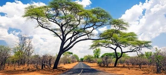 20-night Namibia, Botswana and Zimbabwe tour