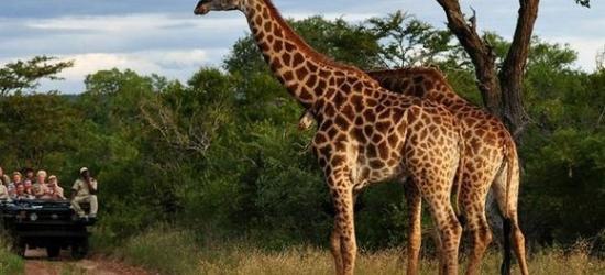 Kenya / Diani Beach and Safari  - Diani Beach Retreat & Adventure in the Savanna at the Pinewood Beach Resort 4* & Safari