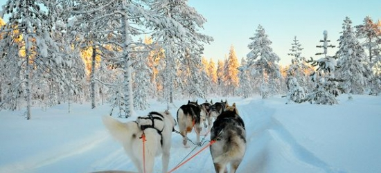 Finland / Lapland - Lapland Adventure with Winter Safaris at the Northern Lights at the Russian Border