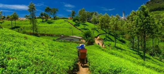 Sri Lanka / Tour - 8 or 10 Nights Discovering Sri Lanka at the Private Tour of Sri Lanka