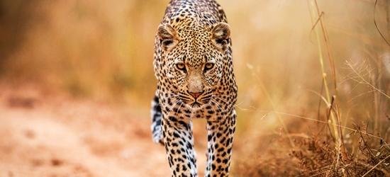Sensational South Africa city-to-safari escape, Johannesburg, Kruger National Park & Mpumalanga