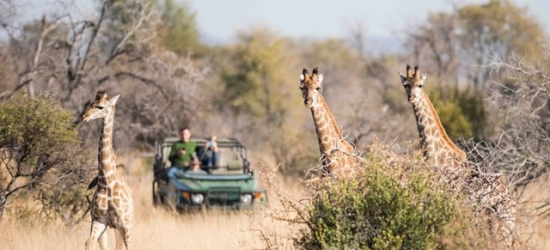 Sensational South Africa safari stay with daily game activities