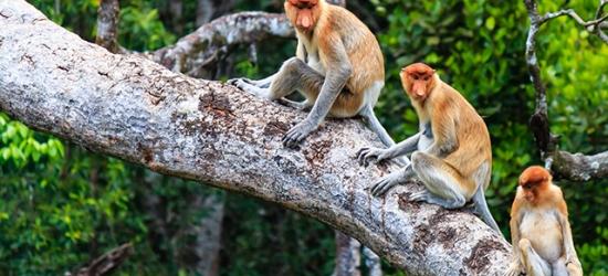 10 night Borneo, Kuala Lumpur & Langkawi escape with orangutan & monkey visits