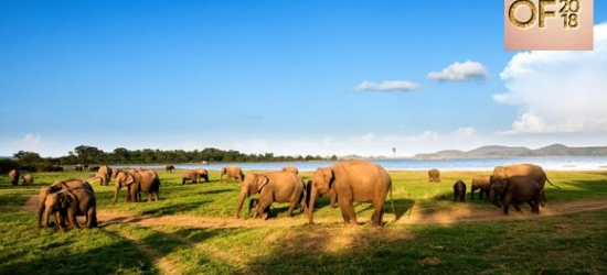 Sri Lanka / From Habarana to Waskaduwa - Best of 2018: Culture and Nature with Blissful Beach Stay at the Private Tour of Sri Lanka with Beach Stay & Optional Dubai
