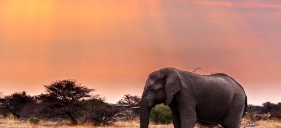 Incredible tour of Namibia's natural wonders with a safari experience