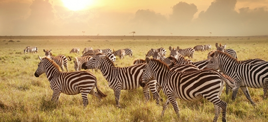 Incredible Kenya adventure with safaris and blissful beach stay, Ukunda, Kwale, Tsavo & Nairobi