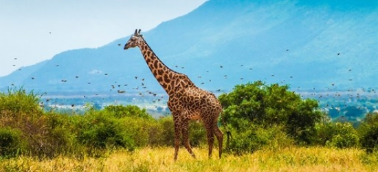 7-night Kenya holiday, meals & 1 free night