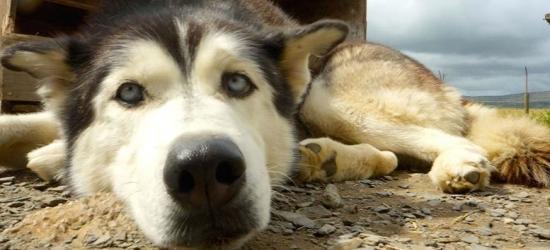 2nt Lake District Escape & Husky Hike for 2 - Dog Training Option!