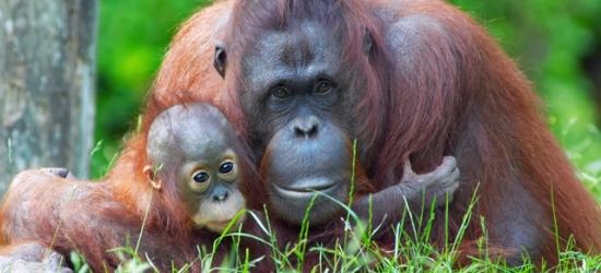 Exotic Borneo, Kuala Lumpur & Bali trip with orangutan visit, Malaysia & Indonesia