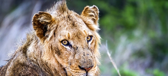 Sensational South Africa safari adventure, Johannesburg, Kruger National Park & Mpumalanga