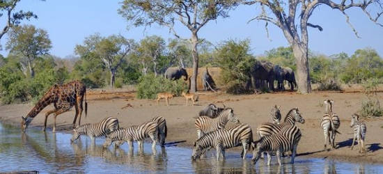 South Africa / Kruger National Park - African Bush Experience  at the Royal Kruger Lodge 4*