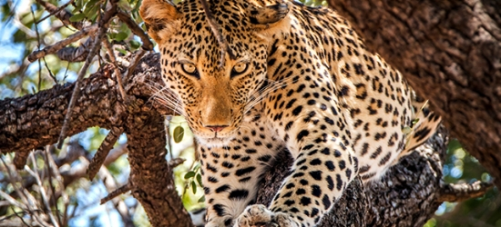 Sensational South Africa adventure with optional Premium Economy flights, Cape Town, Stellenbosch, Johannesburg & Kruger National Park