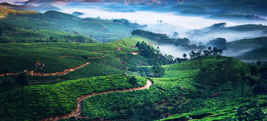 Unforgettable India private tour with houseboat stay, Cochin, Munnar, Thekkady, Alleppey & Kumarakom