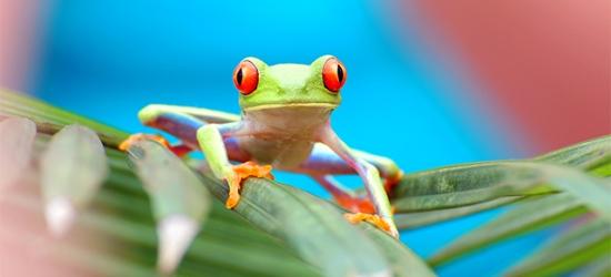 Adventure-filled Costa Rica tour with a beach stay, San José, Tortuguero, La Fortuna, Monteverde & Tamarindo