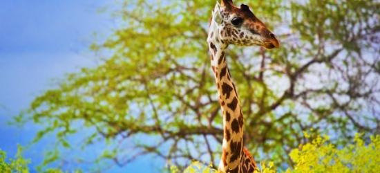 Epic Kenya holiday with safari & beach stays, Diani Beach, Tsavo East National Park & Nairobi
