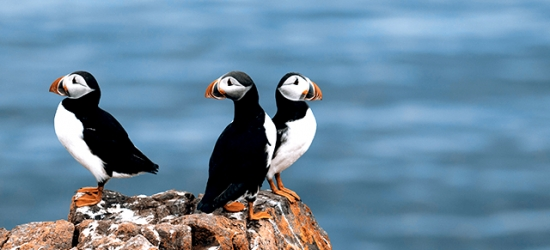 Iceland summer escape with midnight sun whale watching, optional puffin cruise & more thrilling tours, Icelandair Hotel Reykjavik Marina, Reykjavik