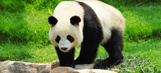 China: 9-night escorted tour inc panda & free Hong Kong stay