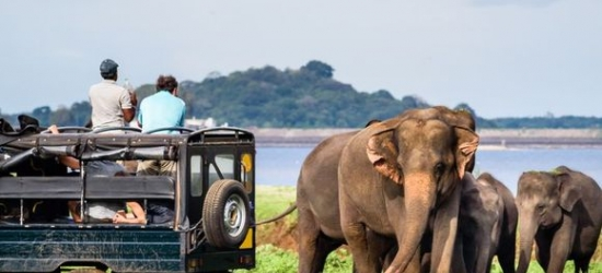 Sri Lanka / Tour - Outstanding Cultural Tour and Blissful Beach Break at the Private Sri Lanka Tour and Amaya Beach Passikudah 4*