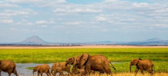 Luxury Tanzania safari & all-inclusive Zanzibar escape