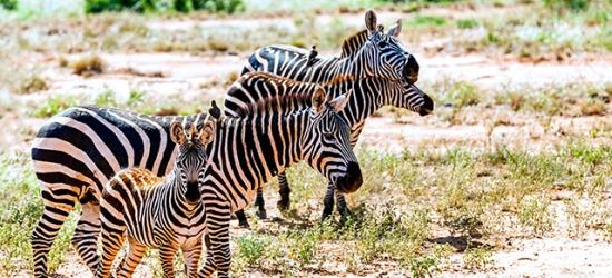 Stunning Kenya beach holiday with optional safari stays, Watamu, with optional Tsavo East National Park & Amboseli National Park