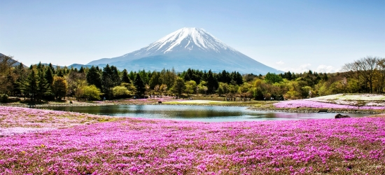 12-night Japan tour, meals, guides & more