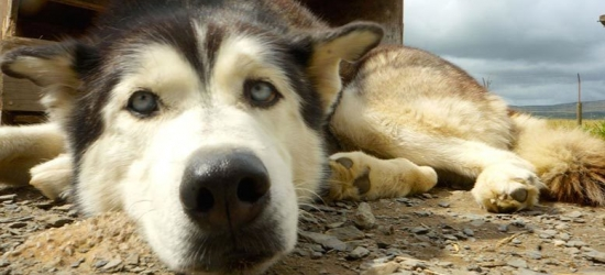 2nt Lake District Tipi Stay for up to 4 - Husky Hike, Sledding or Dog Training Options!