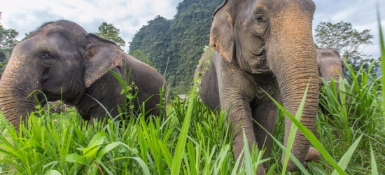 Thai city & beach escape with a unique elephant camping experience, Bangkok, Khao Sok National Park & Khao Lak
