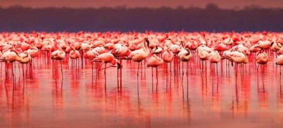 Epic Kenya holiday with unforgettable safari & beach stays, Nairobi, Lake Nakuru, Masai Mara & Diani Beach