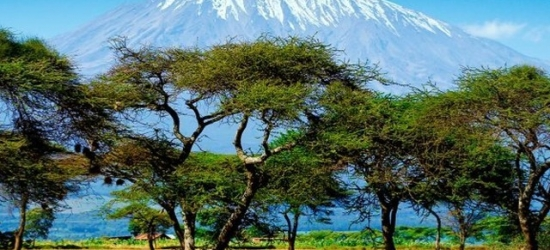 Action-packed Tanzania tour with game drives, a traditional village visit & more, Arusha, Lake Manyara National Park, Serengeti National Park & more