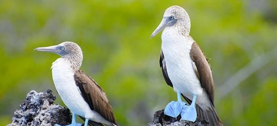 Awe-inspiring Ecuador tour of Amazon & Galapagos Islands, Quito, Baños, the Amazon & the Galapagos Islands
