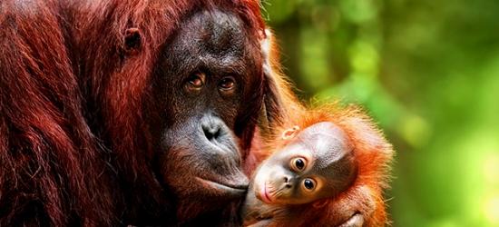 Magical Malaysian wildlife getaway, Kuala Lumpur & Borneo