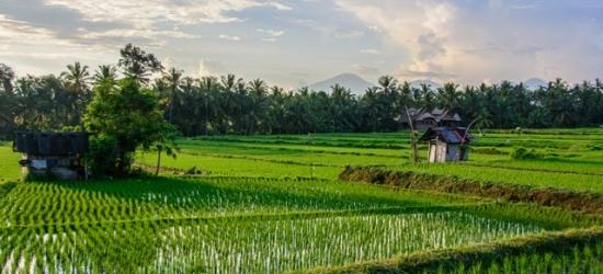 Tranquil Bali escape with boutique hotels & pool villa, Ubud, West Bali National Park & Canggu