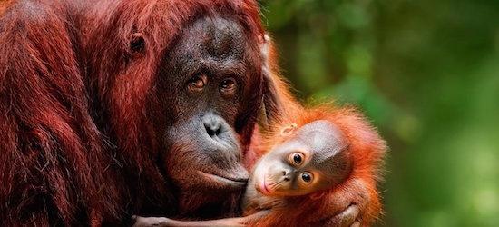 Malaysia & Borneo: Between Rainforests & Orangutans tour