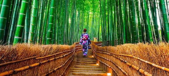 Japan: Charms of Nippon tour