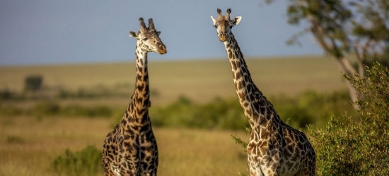 Win a safari for two in the Maasai Mara, Kenya