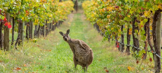 Win the ultimate winery trip to Adelaide and South Australia