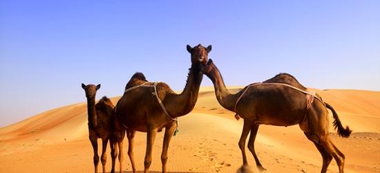 $ Based on 2 people per night   Luxurious resort in the Abu Dhabi desert, Jumeirah Al Wathba Desert Resort & Spa, UAE