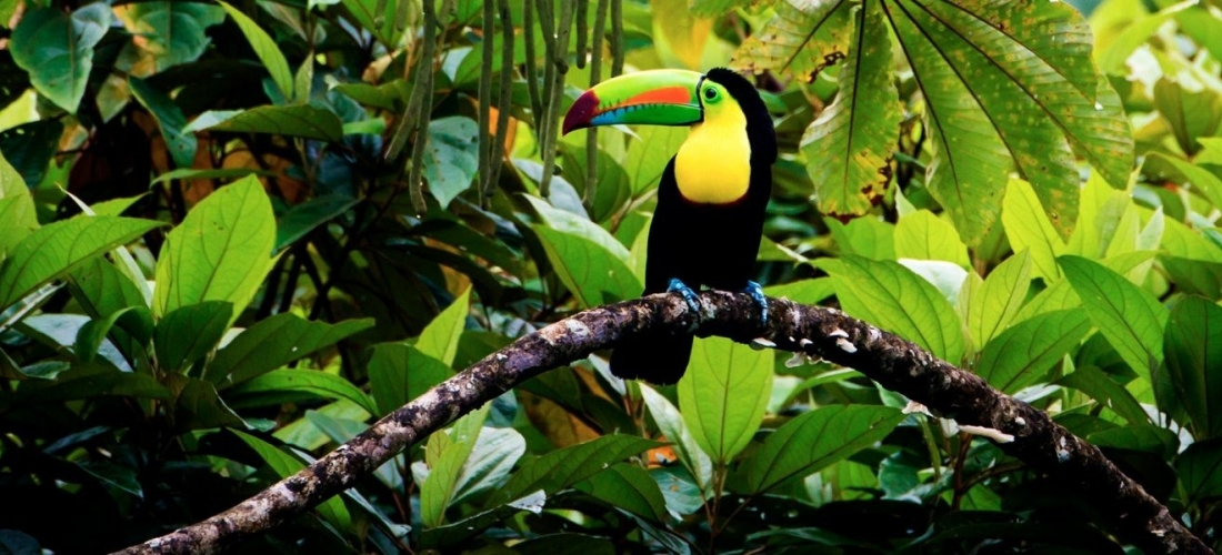 Win a holiday for two to Costa Rica