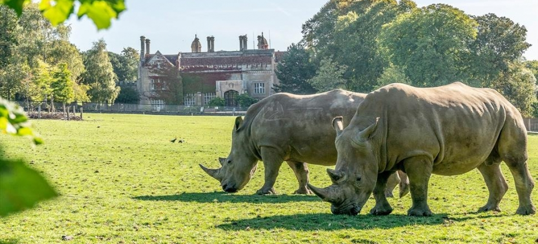 Win a family ticket & overnight stay at Marwell Zoo, Hampshire