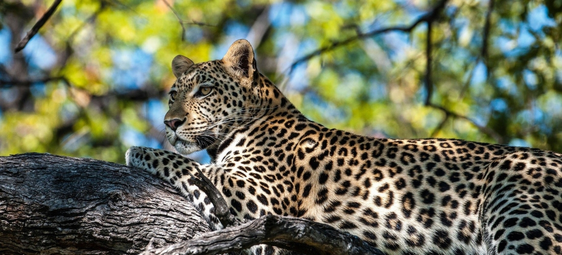 Win a six-night Botswana safari holiday