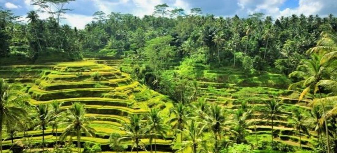 City, culture, beach: Singapore & Bali, Singapore and Ubud, Candidasa and Seminyak, Bali, Indonesia