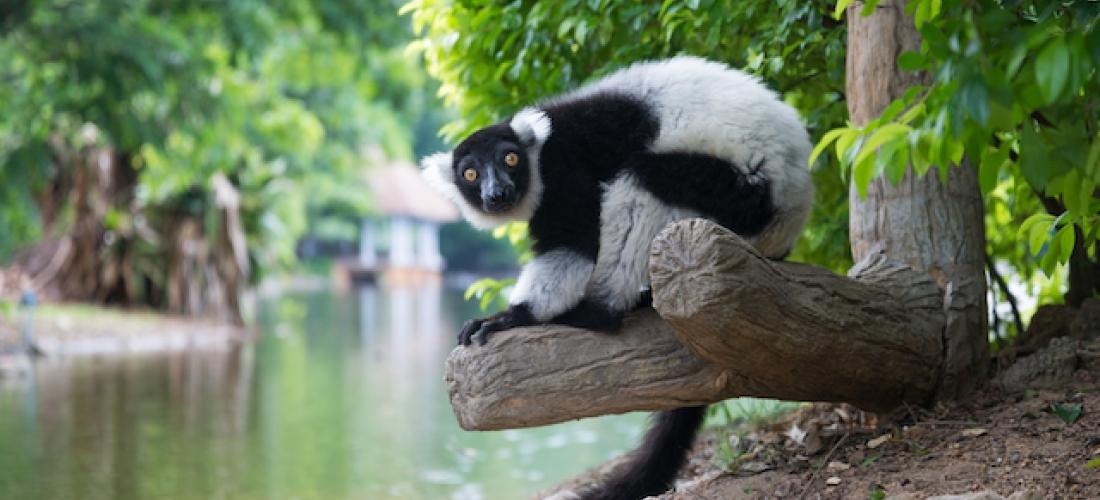 Madagascar: the Land of Wonders
